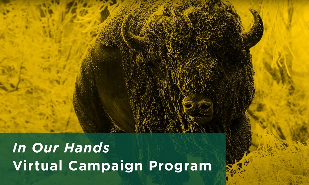 In Our Hands Virtual Campaign Program