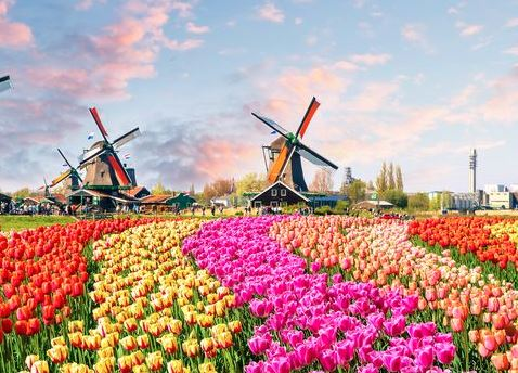Tulips, Windmills and Belgian Delights - Aerial view of Rotterdam