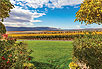 Wines of the Pacific Northwest - Washington Vineyard